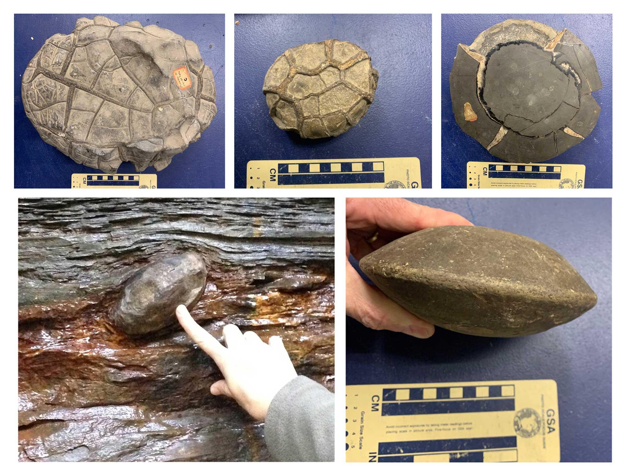 Five photographs of concretion specimens.