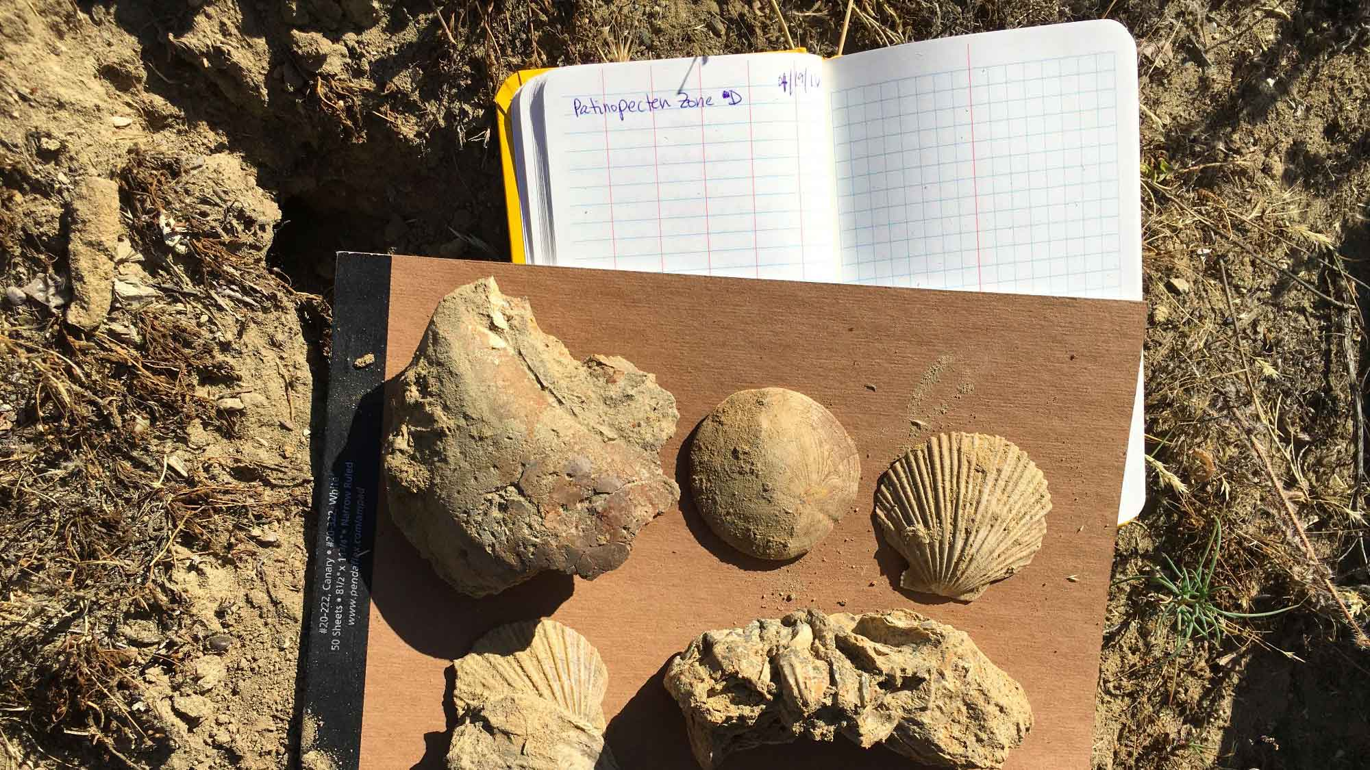 Field photograph of a notebook and five fossil specimens.