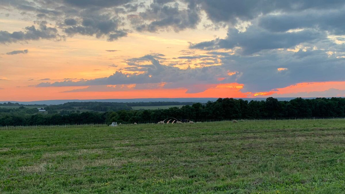 Photograph of a sunset over a field.