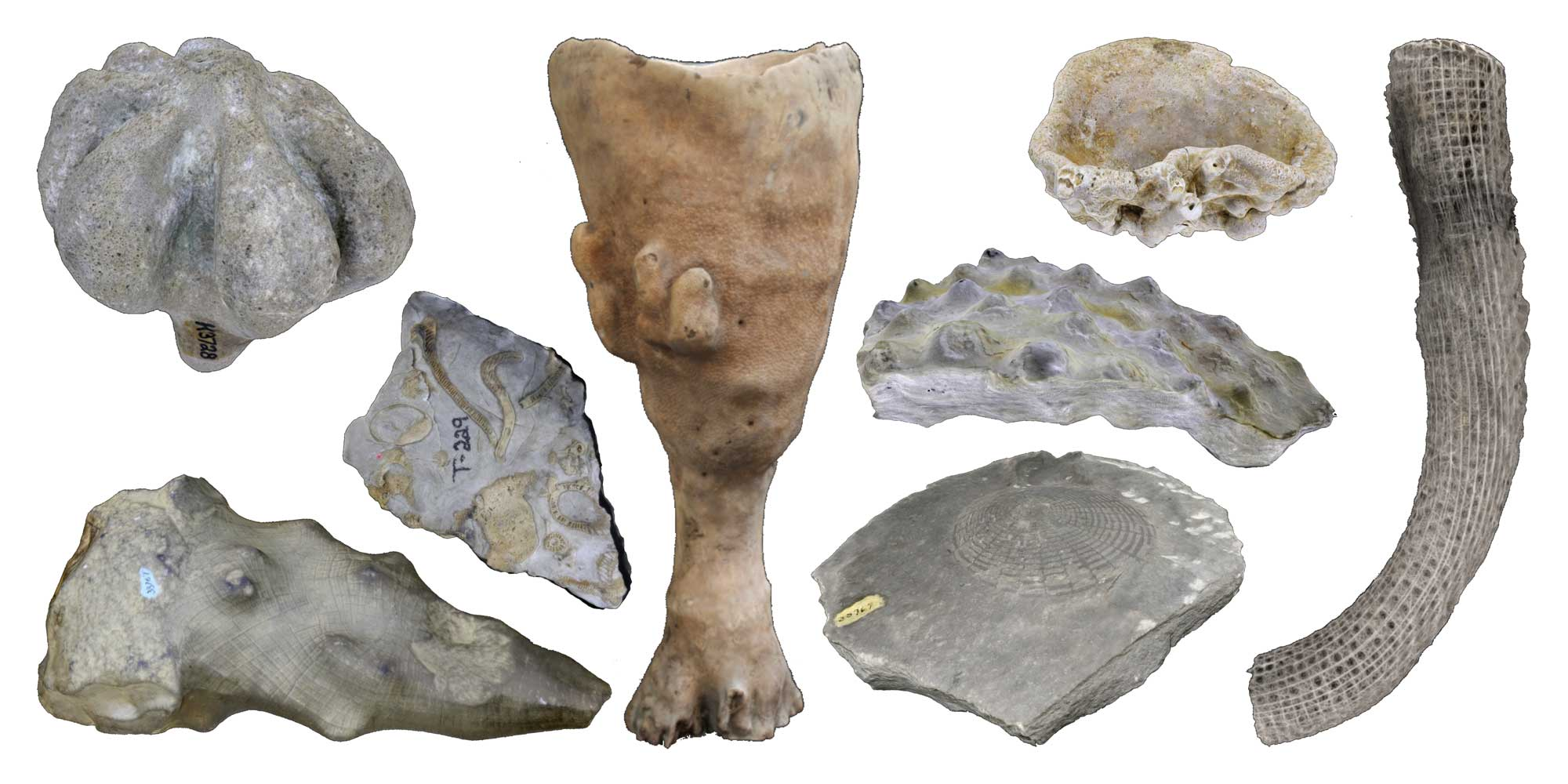 Images of different types of fossil and modern sponge specimens.