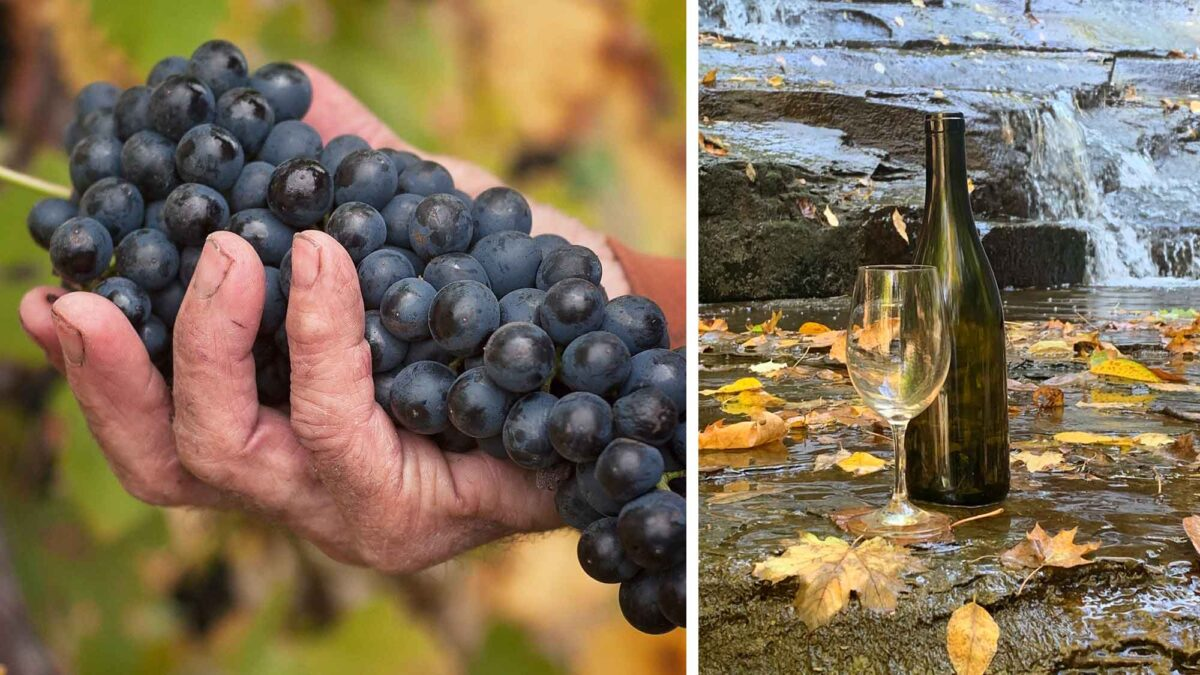 Photographs of a hand holding wine grapes and a bottle of wine and wine glass in front of a waterfall.