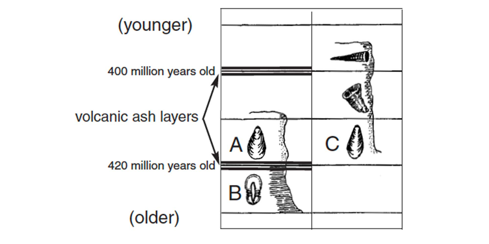 Illustration that shows how relative age dating and absolute age dating can be used in combination to determine the ages of rocks and the fossils that they contain.