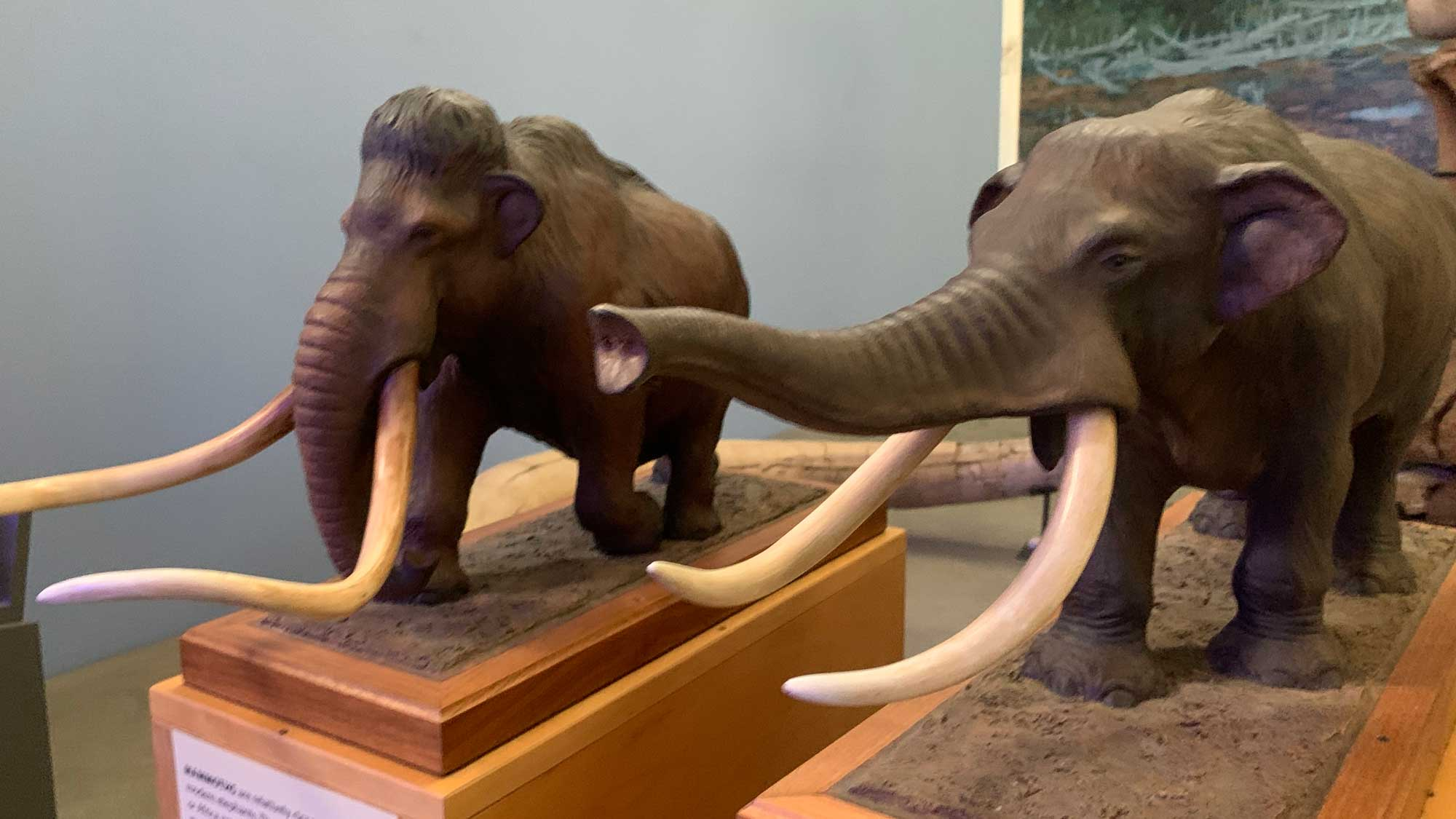 Photograph of models of a mammoth and mastodon.